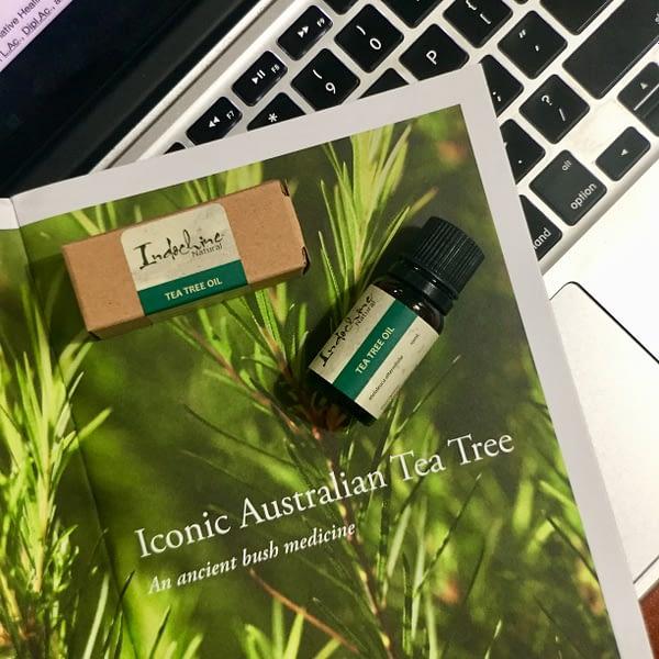 Tea tree ( Melaleuca alternifolia )